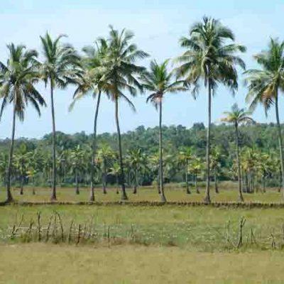 Mayaland-Assagao